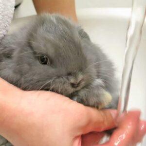Toko Kelinci Bakpao Rabbit Grooming Perawatan Bulu Kelinci Grooming Kelinci