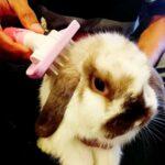Toko Kelinci Bakpao Rabbit Grooming Kering Kelinci Grooming Kelinci